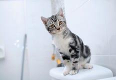 любопытство кота Стоковые Фото