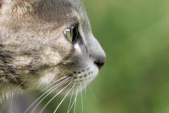 любопытство кота стоковая фотография rf
