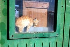 Любопытство убило кот Стоковое Изображение RF