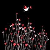 Любящая птица на темной предпосылке Стоковое Изображение RF