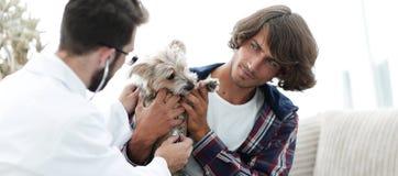 Любящее предприниматель с йоркширским терьером в офисе ветеринара стоковое изображение rf