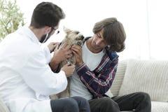 Любящее предприниматель с йоркширским терьером в офисе ветеринара стоковая фотография