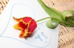 любящий тюльпан Стоковые Фото