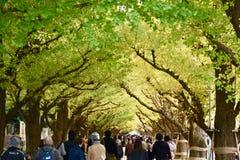 Люди дерева цвета осени идя Токио стоковые фотографии rf