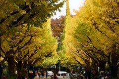 Люди дерева цвета осени идя Токио стоковое изображение