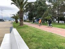 Люди едут велосипед вдоль переулка с зелеными пальмами в парке в теплом тропическом море Грузия, Тбилиси, 16-ое апреля 2019 стоковые изображения rf