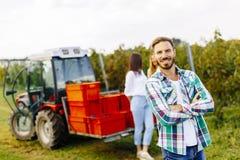 Люди жать виноградины в винограднике в осени Стоковые Изображения