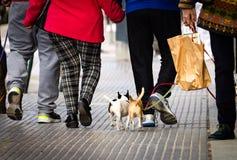 Люди идут небольшие собаки стоковые изображения