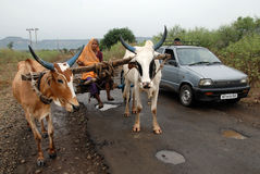 люди Индии соплеменные Стоковые Фотографии RF