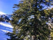 Люди катаясь на лыжах вниз с горы Стоковые Изображения RF