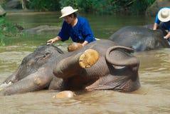 Люди купают слонов в реке Mae Sa Noi на лагере слона Mae Sa в Чиангмае, Таиланде Стоковая Фотография RF