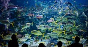 Люди наблюдают на морская жизнь в oceanarium Куалаа-Лумпур стоковая фотография rf