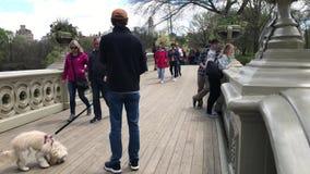 Люди на мосте смычка в Central Park сток-видео