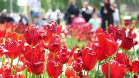 Люди парка цветков идя видеоматериал