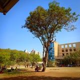 Люди под тенью дерева стоковое фото rf
