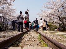 Люди принимают selfies вдоль деревьев Сакуры и железнодорожных путей, уклона Keage, Киото, Японии стоковые фото