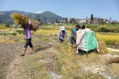 Люди работая с молотить - машина в Непале Стоковое Изображение