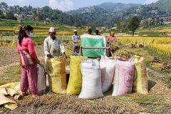 Люди работая с молотить - машина в Непале Стоковое Фото