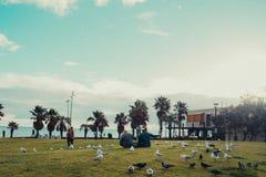 Люди сидя на траве в парке вполне птиц стоковые изображения rf