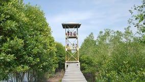 Люди смотря лес мангровы сверху башня в консервации Lubuk Kertang леса мангровы видеоматериал