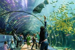 Люди стоят в благоговении в тоннеле плексигласа показывая тварей моря на аквариуме США Georgia с водолазами акваланга в танке Стоковая Фотография