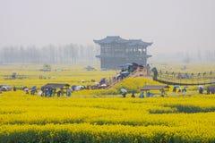 Люди с зонтиками, сезон дождей в поле рапса Qiandao, Китае стоковое изображение
