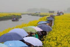 Люди с зонтиками, сезон дождей в поле рапса Qiandao, Китае стоковое фото rf