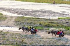 Люди февраля 17,2018 аборигенные возвращающ домой в экипаже азиатского буйвола, Capas Стоковые Изображения