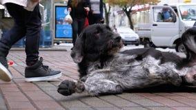 Люди petting бездомная собака на улице города на фоне проходить автомобили и людей видеоматериал