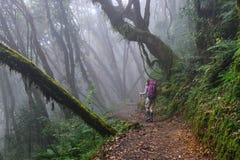 Люди trekking в лесе стоковые изображения rf