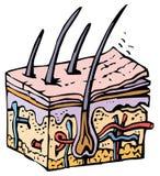 людская кожа Стоковое фото RF