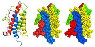 Людская молекула erythropoietin иллюстрация штока