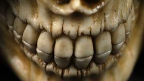 людская челюсть сток-видео