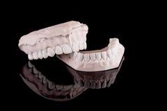 людские модельные зубы Стоковое Изображение RF