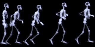 людское идущее skelegon Стоковая Фотография RF