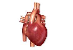 Людское сердце бесплатная иллюстрация