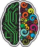 Людской мозг стоковое изображение