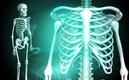 людской скелет нервюры Иллюстрация штока