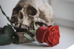 людской череп стоковое фото
