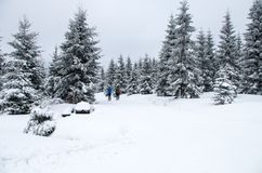 3 люд в расстоянии делая беговые лыжи, Jizerka, чехию стоковая фотография