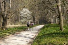 2 люд идут вдоль пути в парке весной Стоковая Фотография RF