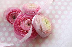 Розовые цветки на многоточиях польки Стоковые Фото