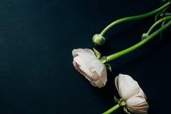 Лютик на черной предпосылке с влияниями instagram Стоковая Фотография