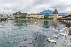 Люцерн Швейцария с деревянными мостом и лебедями часовни Стоковая Фотография