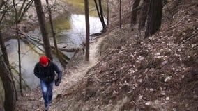 Люди в сосновом лесе сток-видео