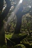 Люди дерева Стоковая Фотография RF