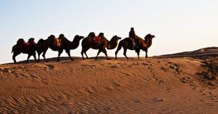Люди едут верблюд Стоковое фото RF