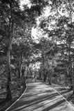 Люди едут в парке Sri Nakhon Khuean Khan, челке Kachao, Таиланде Изображение черно-белого Стоковое Изображение