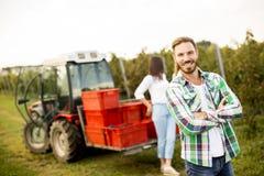 Люди жать виноградины в винограднике в осени Стоковые Изображения RF