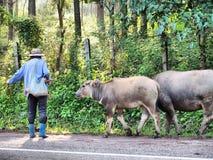 Люди и животное Стоковая Фотография RF